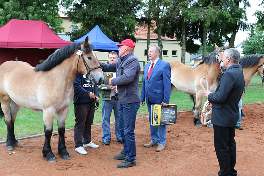 Wystawa koni w Sztabinie