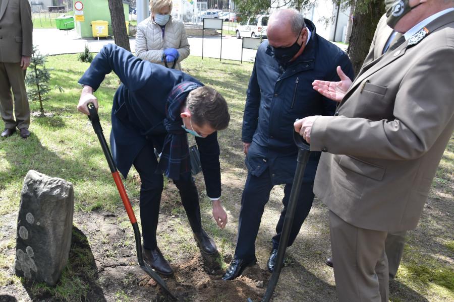 Zasadzenie świerków wyhodowanych z nasion poświęconych przez Papieża Franciszka podczas przekazania choinki przez polskich leśników w 2017 r.