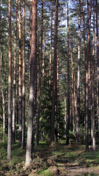 Las iglasty w soneczne popołudnie