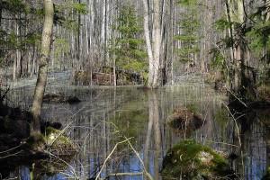 Rezerwat Glinki