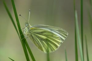 Wiosna - motyl